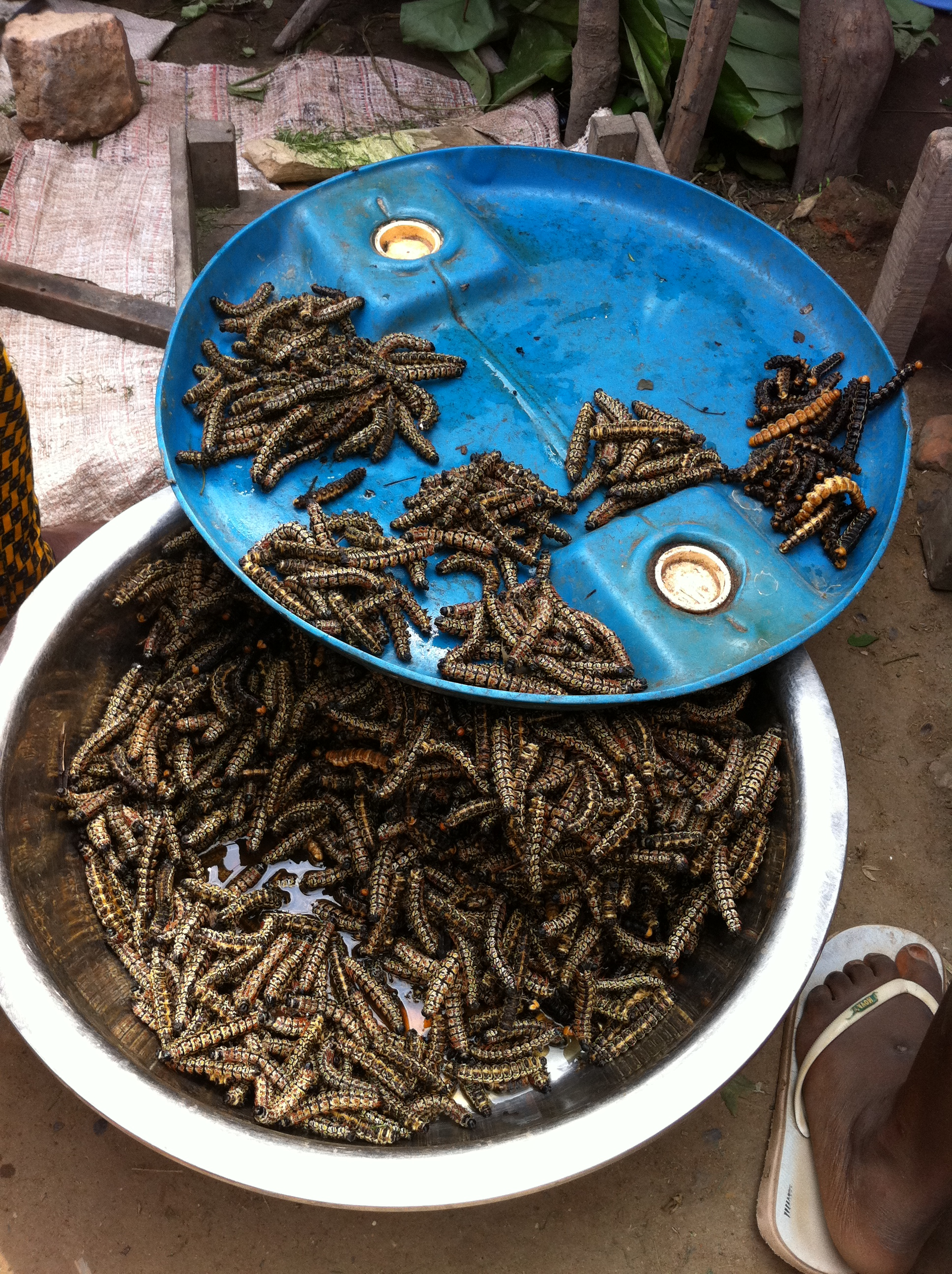 Caterpillars for sale at the meat market